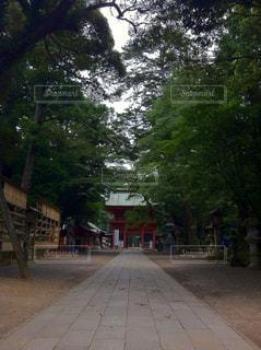 森林の写真・画像素材[331443]