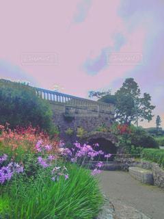 小さな庭な花の写真・画像素材[1239388]