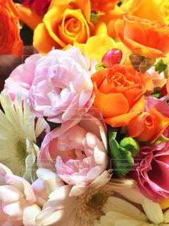 色とりどりの花の写真・画像素材[1538056]