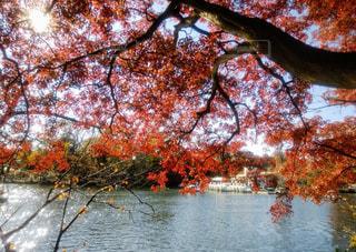 紅葉の綺麗な水辺の写真・画像素材[2811151]