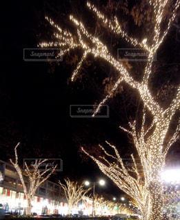 眩い光の写真・画像素材[2811413]