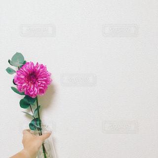 ピンクの花と花瓶の写真・画像素材[892311]