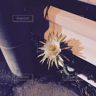 花の写真・画像素材[328949]