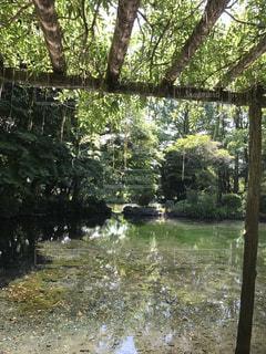 湧き水の池の写真・画像素材[797644]