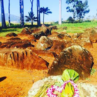 ハワイの子宝に恵まれるという超人気のパワースポットの写真・画像素材[797886]