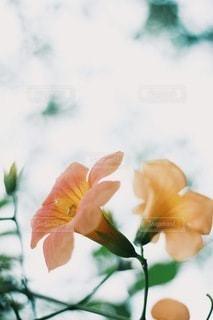 風景の写真・画像素材[3836]