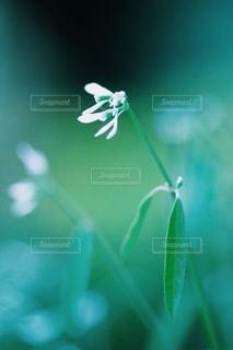 花の写真・画像素材[3835]