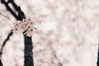 花の写真・画像素材[3830]