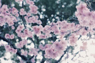 花の写真・画像素材[3829]