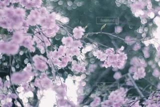 花 - No.3828