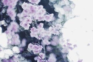 花の写真・画像素材[3807]