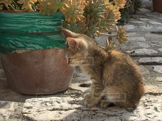 猫 - No.282632
