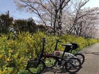 サイクリングの写真・画像素材[1245612]