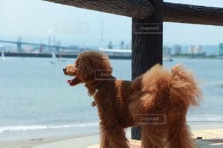 浜辺の犬の写真・画像素材[2228472]