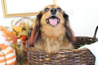 犬の写真・画像素材[2483201]