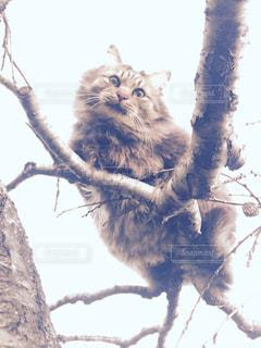 猫の写真・画像素材[282804]