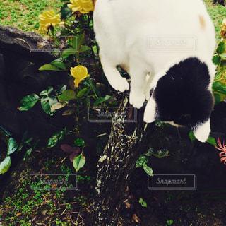 猫の写真・画像素材[337133]