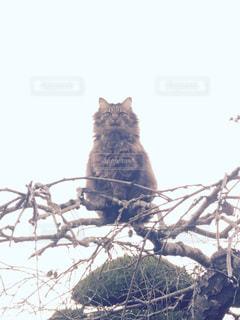 猫の写真・画像素材[337134]