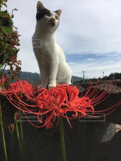 猫の写真・画像素材[337136]