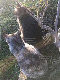猫の写真・画像素材[337142]
