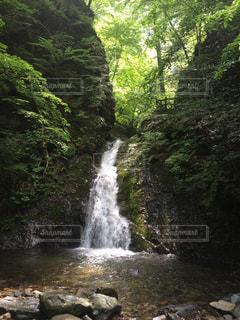 自然の写真・画像素材[286354]