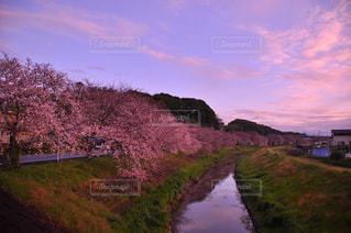 春 - No.345762