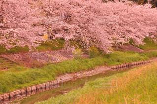春の写真・画像素材[345763]