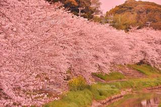 春の写真・画像素材[345764]