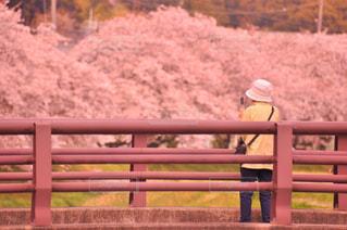 春の写真・画像素材[440166]