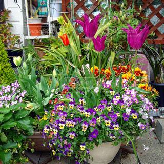 春の写真・画像素材[576242]