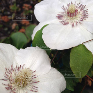 花の写真・画像素材[576535]