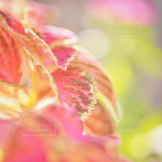 夏の写真・画像素材[576538]