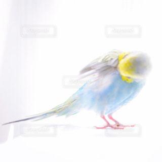 青の写真・画像素材[576544]