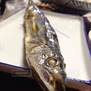 北海道 釧路からの秋刀魚の写真・画像素材[1536489]