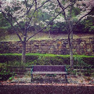 春の写真・画像素材[482982]