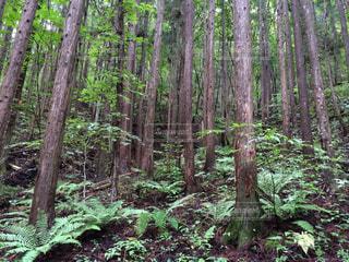 木の写真・画像素材[283737]