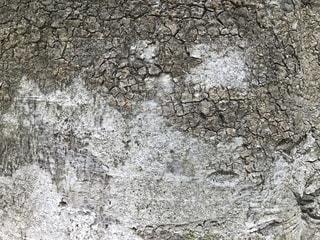 近くの岩のアップの写真・画像素材[1402610]