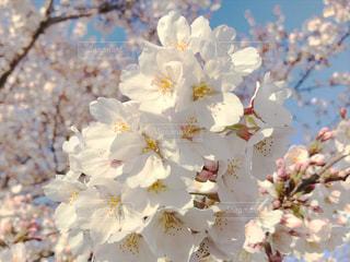 近くの花のアップの写真・画像素材[1881394]