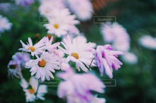 花の写真・画像素材[283730]