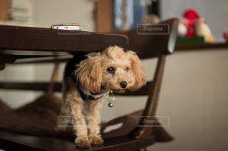 犬の写真・画像素材[284826]