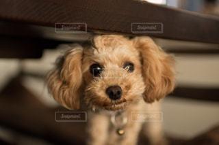 犬の写真・画像素材[284827]