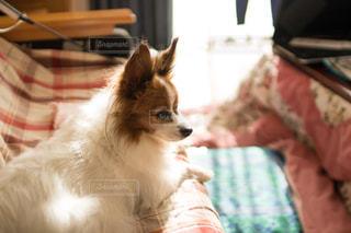 犬の写真・画像素材[284828]