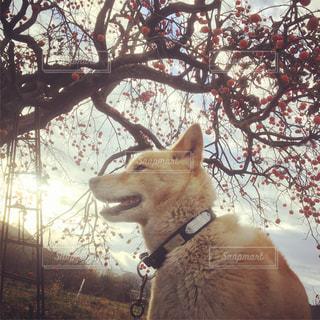 犬の写真・画像素材[283815]