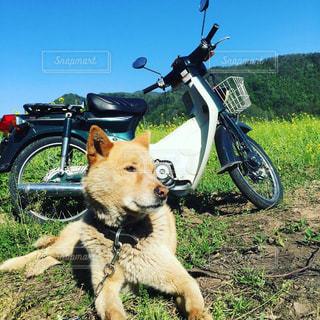 犬の写真・画像素材[292721]