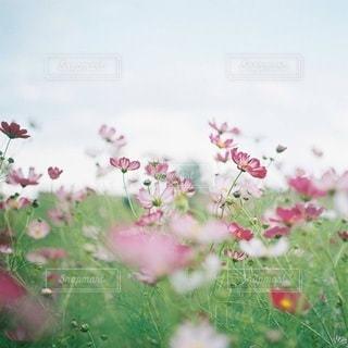 風景の写真・画像素材[3782]