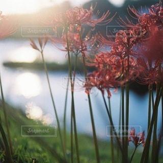 風景の写真・画像素材[3778]