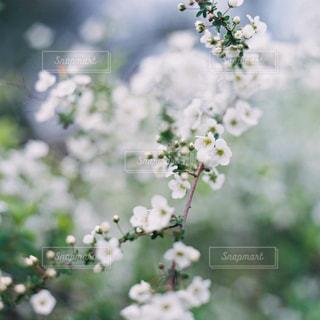 花の写真・画像素材[468841]
