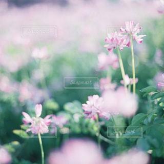 自然の写真・画像素材[515654]