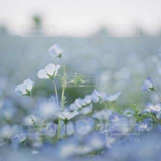 自然の写真・画像素材[515659]