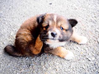 犬の写真・画像素材[283860]